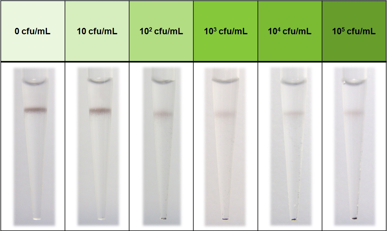 식중독 균의 농도에 따라 검출되는 모습을 나타낸 그림