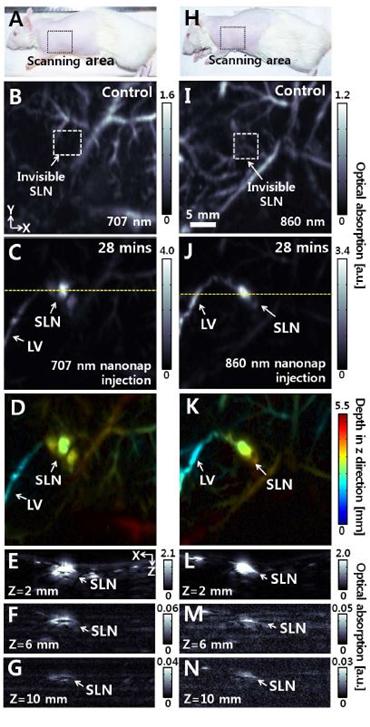 나프탈로사이아닌(나노랩) 707nm와 860nm 두 가지를 동시에 활용하여 살아있는 쥐의 림프절을 광음향 영상으로 촬영.