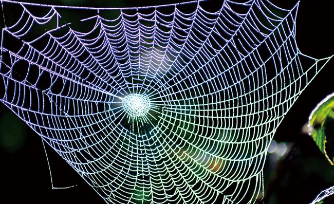 거미줄 이미지