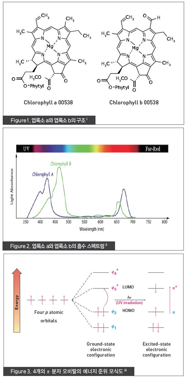 엽소록 a와 엽록소 b의 구조, 엽록소 a와 엽록소 b의 흡수 스펙트럼, 4개의 π 분자 오비탈의 에너지 준위 모식도
