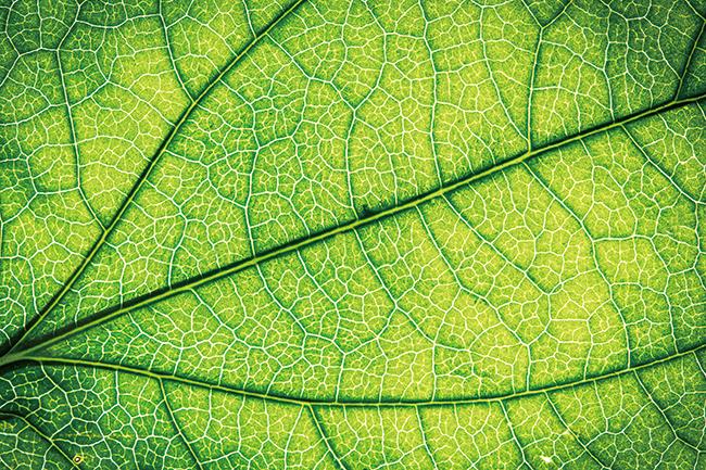 나뭇잎을 확대한 이미지