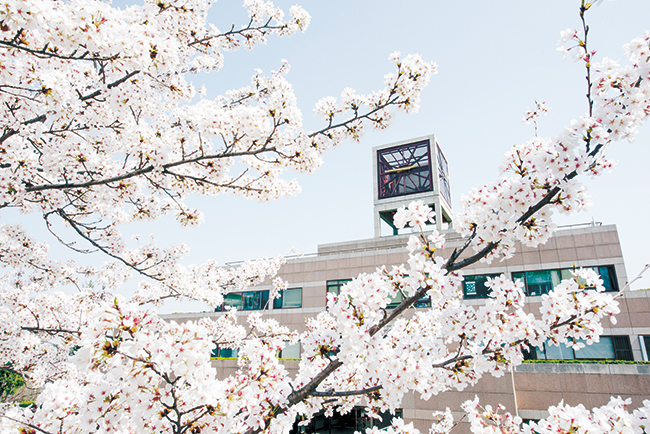 포스텍에 핀 벚꽃 이미지