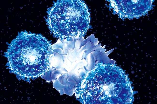 세포 이미지