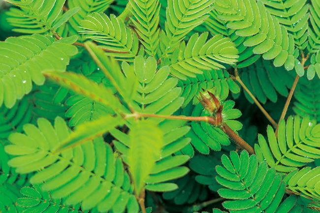 식물 이미지