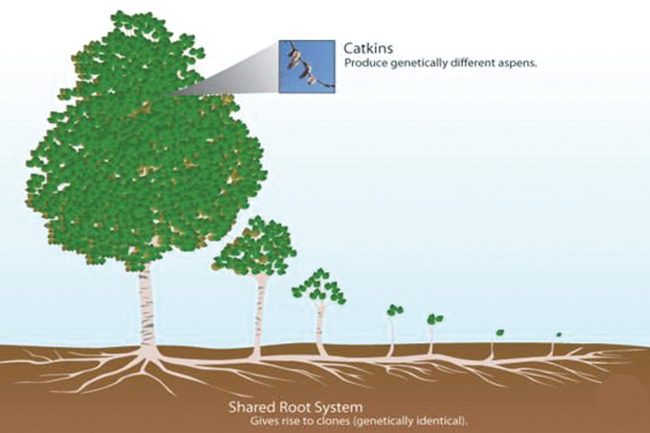 부모 식물의 뿌리로부터 자손 식물이 생겨나는 모습을 보여주는 이미지